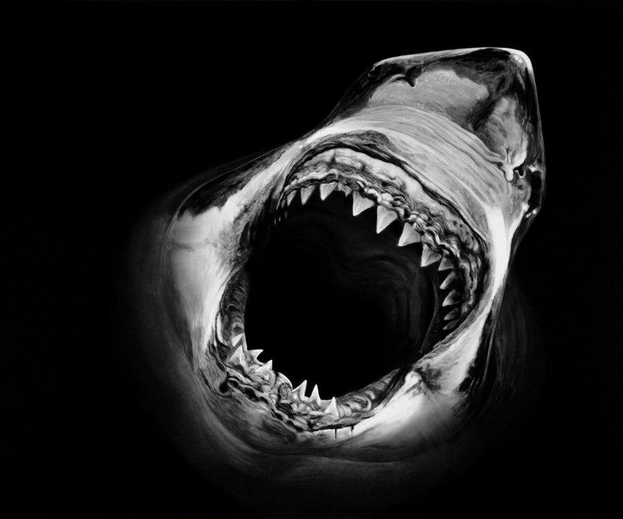 Robert Longo - Untitled (Shark 14), série Perfect Gods, 2008